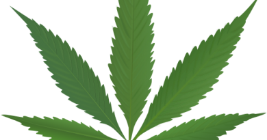 Minister for Health announces developments to Medical Cannabis Access Programme, increasing availability and benefiting eligible patients around Ireland
