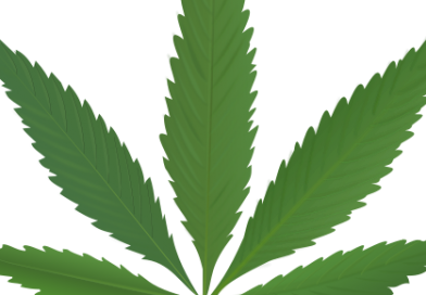 Two medicinal cannabis products approved for use in Ireland